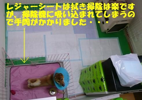 f0121712_22234699.jpg