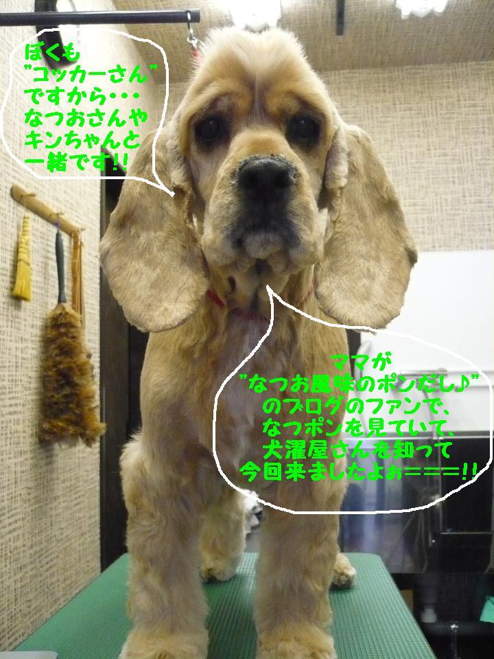 b0130018_1114233.jpg