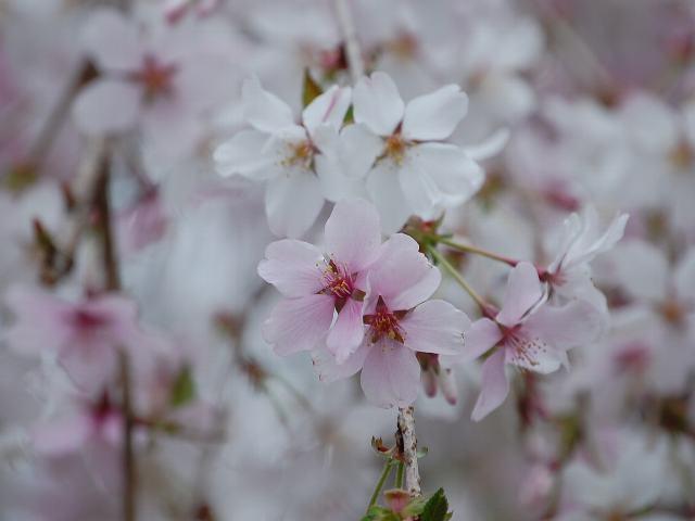 花の仲間調べ