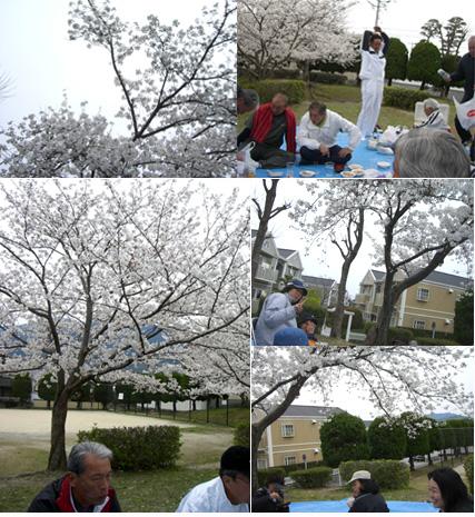 2009春、花見会を開催!!_c0067645_15454692.jpg