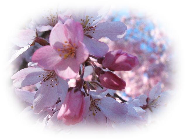 春_e0046155_13454513.jpg
