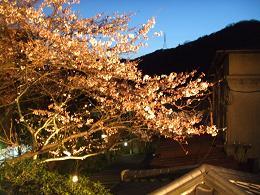 2009年 4月2日かねよの「桜」実況中継_c0078659_16164191.jpg