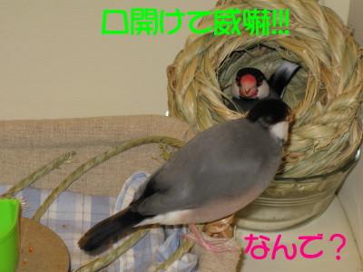 b0158061_2012066.jpg