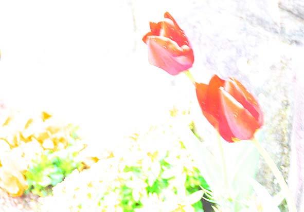 f0198771_10876.jpg
