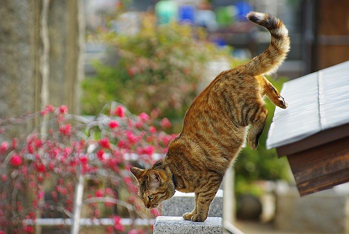 宝土寺のネコ_c0152379_7523563.jpg
