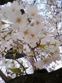 春爛漫_f0201790_1871564.jpg