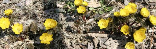 庭の花々_e0054299_9121179.jpg