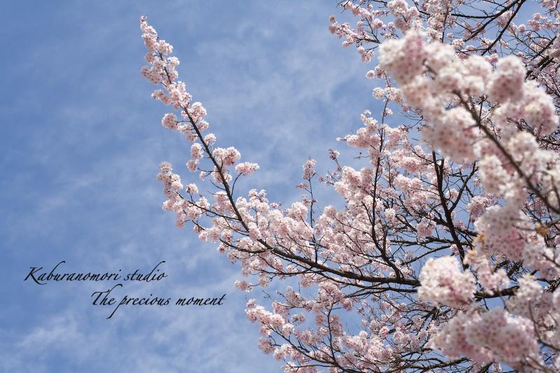 09/4/3  時を見据えて2000年 桜老師_c0137403_2147124.jpg