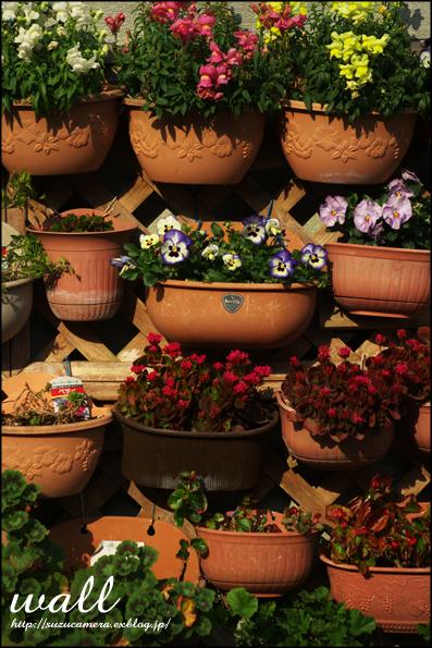 塀いっぱいの花_f0100215_23302338.jpg
