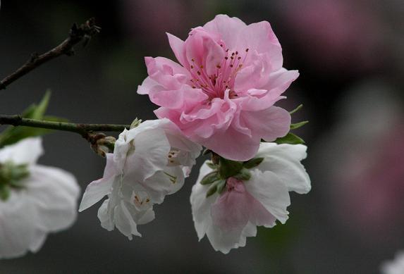 春爛漫_d0150720_8455014.jpg
