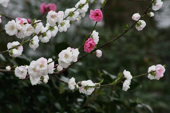 春爛漫_d0150720_8461229.jpg