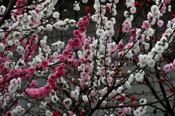 春爛漫_d0150720_8462920.jpg