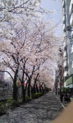 巣鴨の桜も満開です〓_f0140343_1132303.jpg