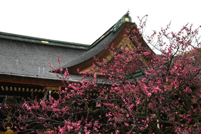 京都 北野天満宮 梅の花_e0127948_1711612.jpg