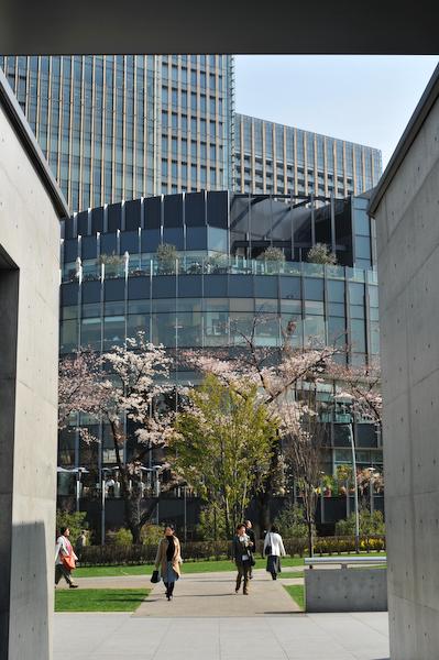 六本木・東京ミッドタウン、国立新美術館の桜_a0003650_23373368.jpg