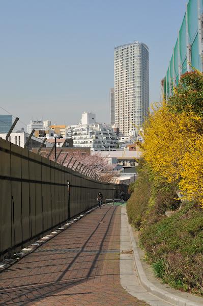 六本木・東京ミッドタウン、国立新美術館の桜_a0003650_23384054.jpg