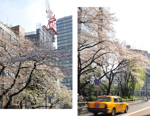 六本木・東京ミッドタウン、国立新美術館の桜_a0003650_23404914.jpg