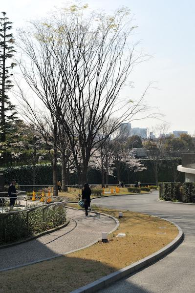 六本木・東京ミッドタウン、国立新美術館の桜_a0003650_23421513.jpg