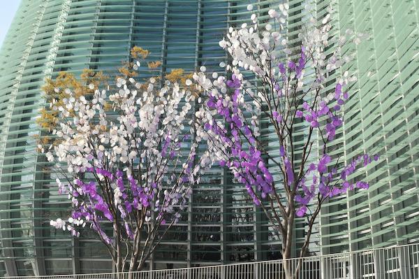 六本木・東京ミッドタウン、国立新美術館の桜_a0003650_23424580.jpg