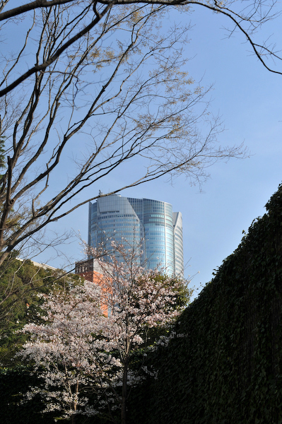 六本木・東京ミッドタウン、国立新美術館の桜_a0003650_23432871.jpg