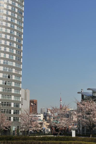 六本木・東京ミッドタウン、国立新美術館の桜_a0003650_23434886.jpg