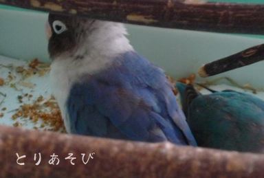 のんびり〜〜_e0147757_0182724.jpg