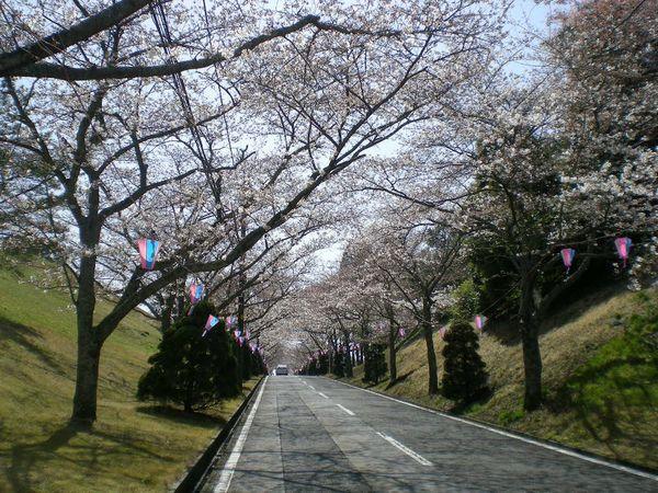 2009年4月3日(金)十万石のお花見!_f0060461_15543429.jpg