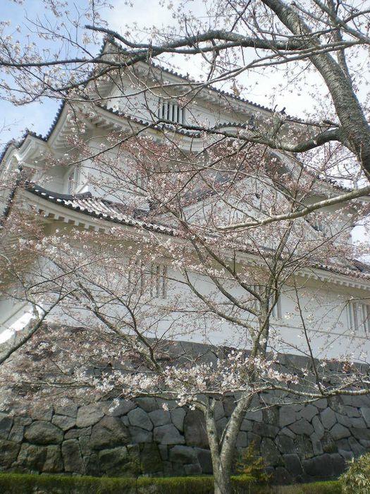 2009年4月3日(金)十万石のお花見!_f0060461_1611152.jpg