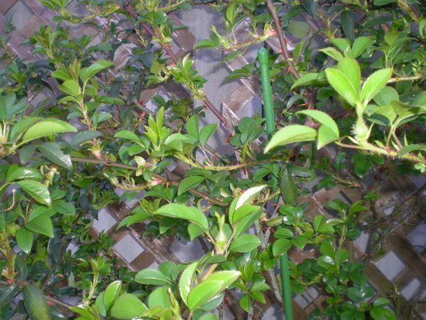 2009年4月3日(金)十万石のお花見!_f0060461_16231269.jpg