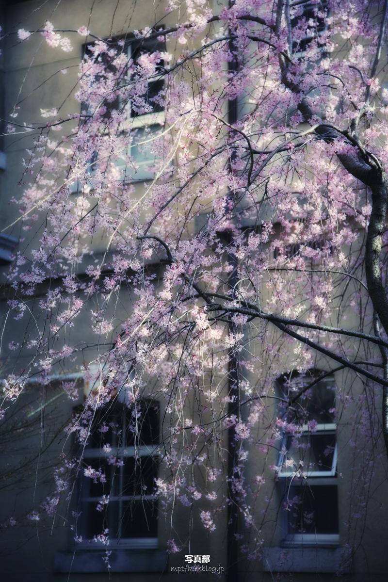 そうだ 京都、行こう。 9 _f0021869_0161136.jpg