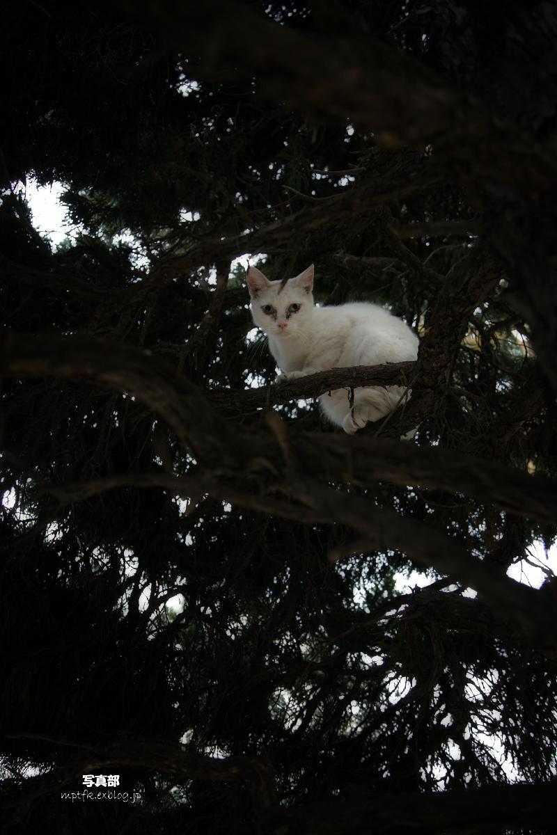 猫にゃん_f0021869_2362656.jpg