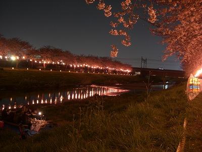 ホームタウンの桜状況 4_d0061678_2327727.jpg
