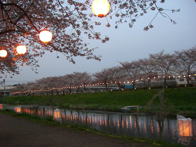 ホームタウンの桜状況 4_d0061678_23585517.jpg