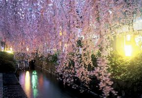 「桜棲家」ってどうでしょう・・・。_d0091909_13433624.jpg