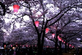 「桜棲家」ってどうでしょう・・・。_d0091909_13573821.jpg