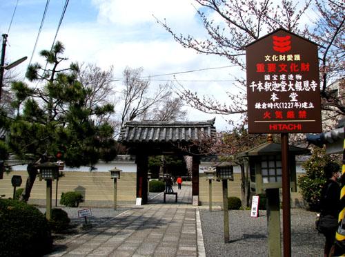千本釈迦堂 おかめ桜_e0048413_22483178.jpg