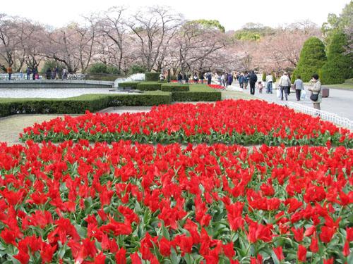 府立植物園_e0048413_23235466.jpg