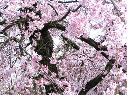 府立植物園_e0048413_23242232.jpg