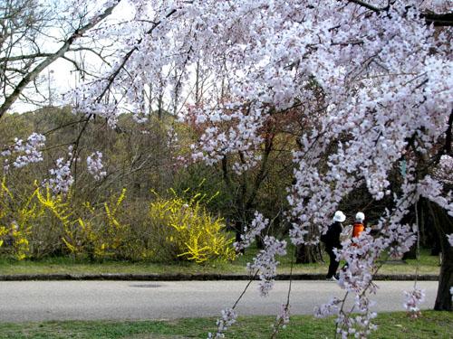 府立植物園_e0048413_23244782.jpg
