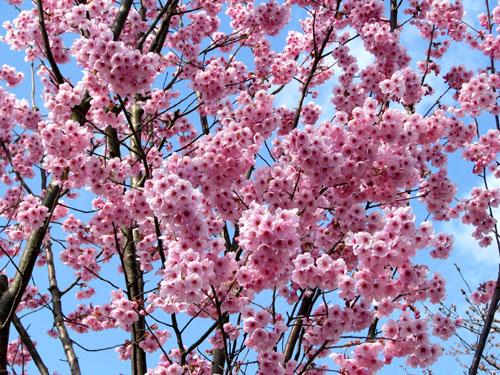 府立植物園_e0048413_23252623.jpg