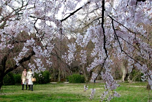 府立植物園_e0048413_2325432.jpg