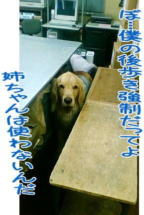 f0109418_2334446.jpg