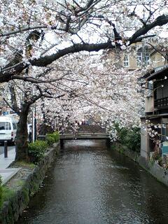 夜桜_d0053335_1721039.jpg