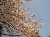 野の花_a0068339_10241780.jpg