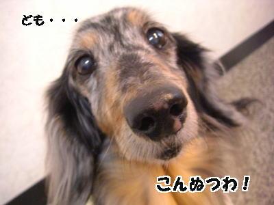 d0020869_15383851.jpg