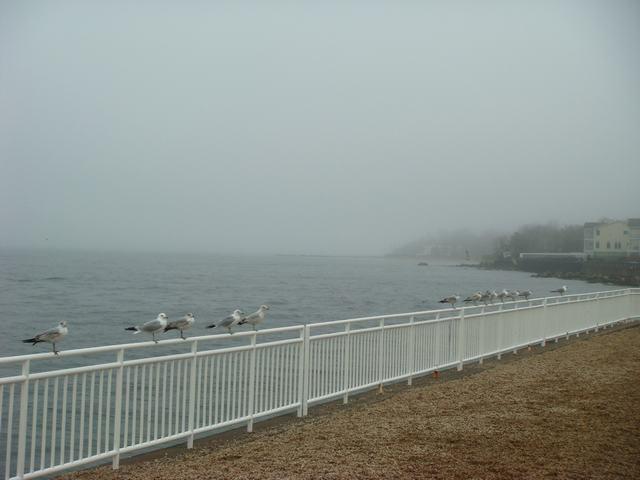 ロングアイランドの海辺を散歩して、_d0100880_9245244.jpg