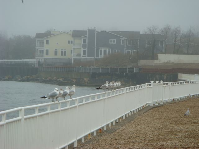 ロングアイランドの海辺を散歩して、_d0100880_9253165.jpg