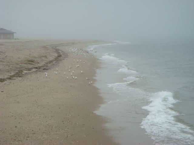 ロングアイランドの海辺を散歩して、_d0100880_928396.jpg