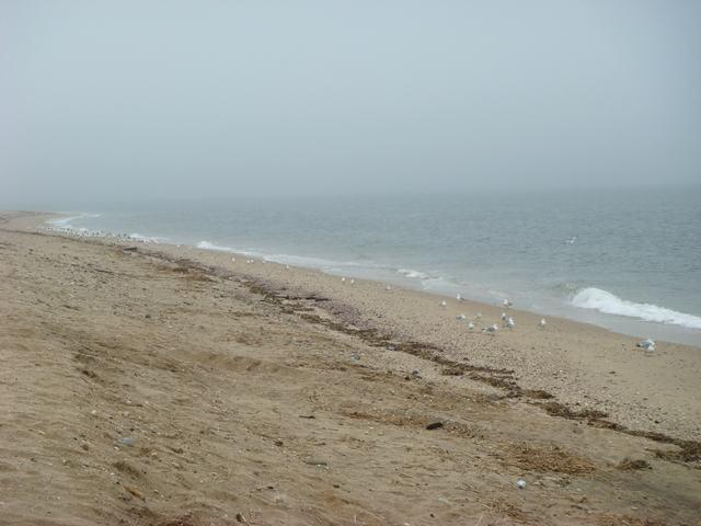 ロングアイランドの海辺を散歩して、_d0100880_9285419.jpg