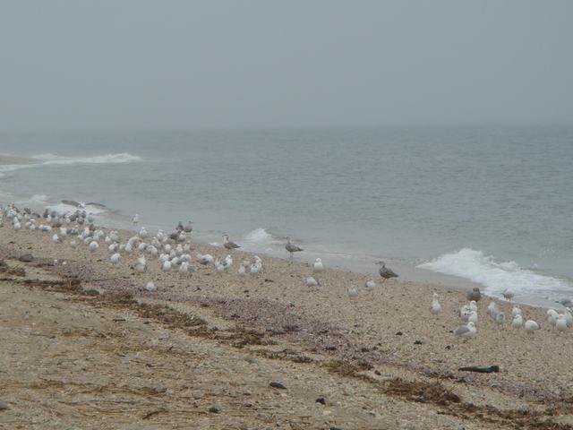 ロングアイランドの海辺を散歩して、_d0100880_929321.jpg